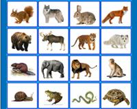 Дикие животные по английски - интерактивные карточки №1,2