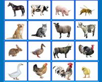 Домашние животные по английски - звуковые карточки