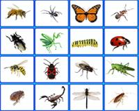 Насекомые по английски - интерактивные карточки и тест