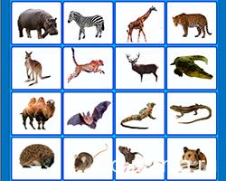 Дикие животные по английски с транскрипцией — интерактивные карточки, набор №2