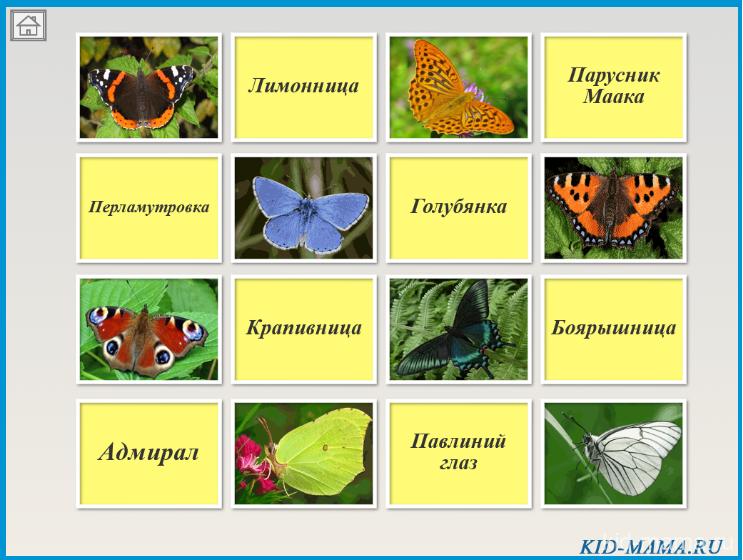 "Бабочки.  Онлайн игра ""Найди пару"""