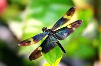 Стрекозы 2: 20 фактов из жизни замечательных насекомых.